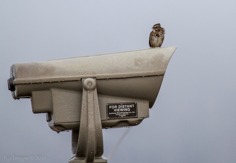 Sightseer, Grays Harbor National Wildlife Refuge