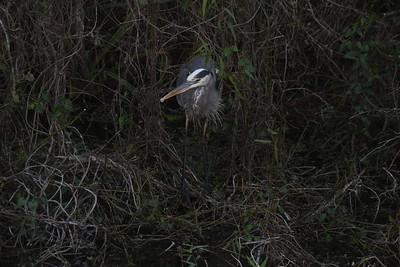Shark Valley - Everglades NP