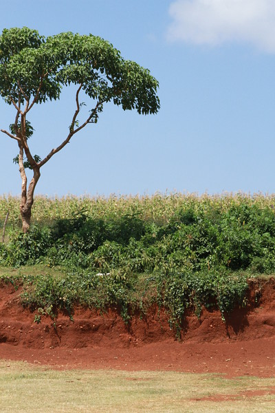 Kenya Part1 '15 2676.JPG