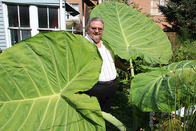 Large Plants, Dale Freudenberger's Home, Pine St, Tamaqua (9-27-2012)