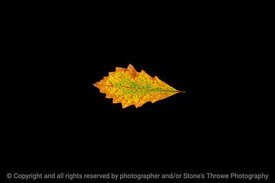 015-leaf-wdsm-09oct19-12x08-008-400-3965