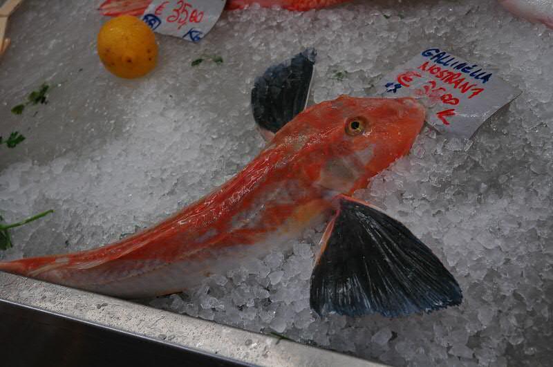 Flying Fish on Ice - Genoa, Italy