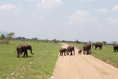 1494239977African-Safari-61.jpg