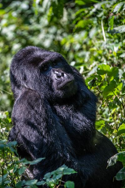 Uganda_T_Gor-710.jpg