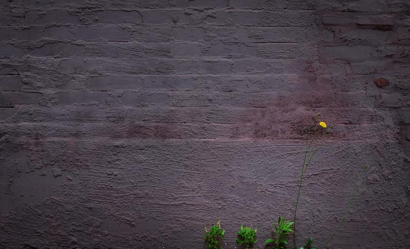 Weeds-.jpg