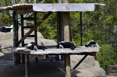 Zoo April 29 2012