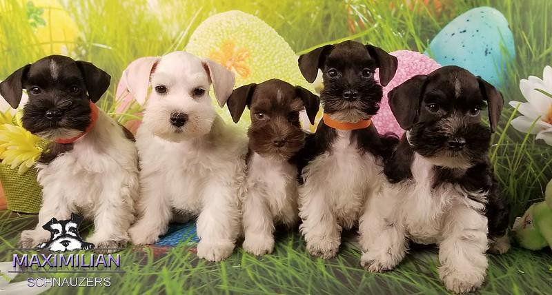 Mystic pups 020.jpg