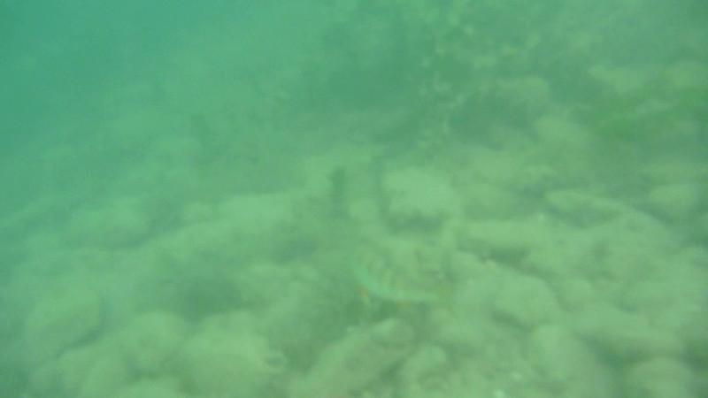 Lake Garda Fish.mov