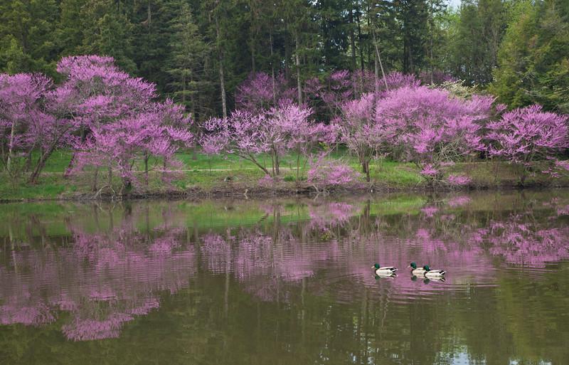 Spring13-0470.jpg