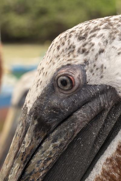 Galapagos-Best-118.jpg