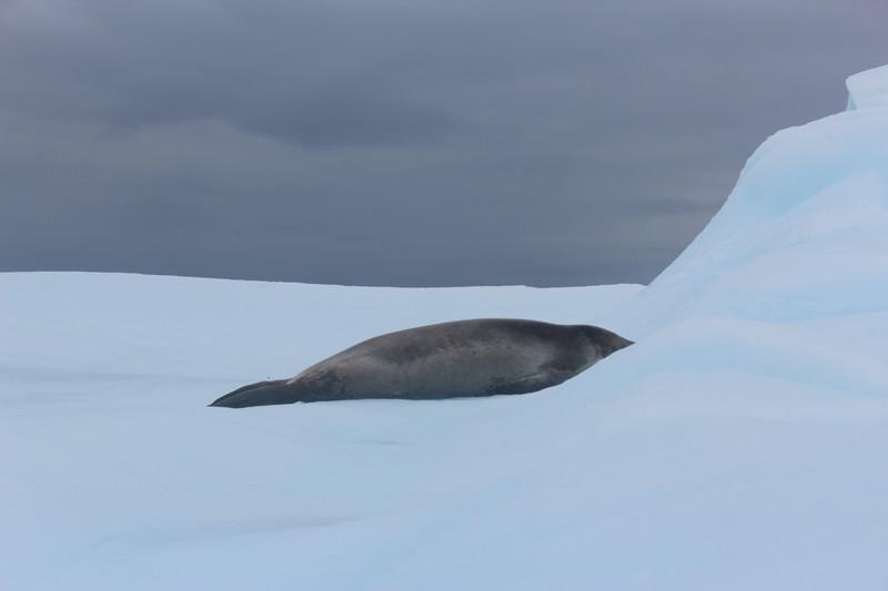 Antarctica 269.JPG