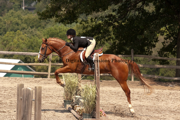 Novice Equitation
