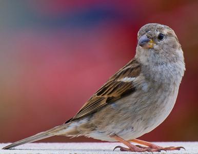 Les oiseaux ; Birds