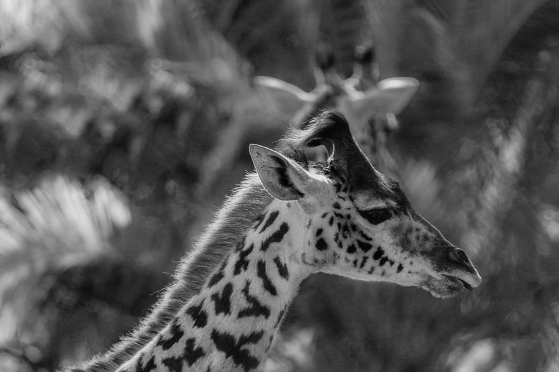 SD Zoo 3.20-137.jpg