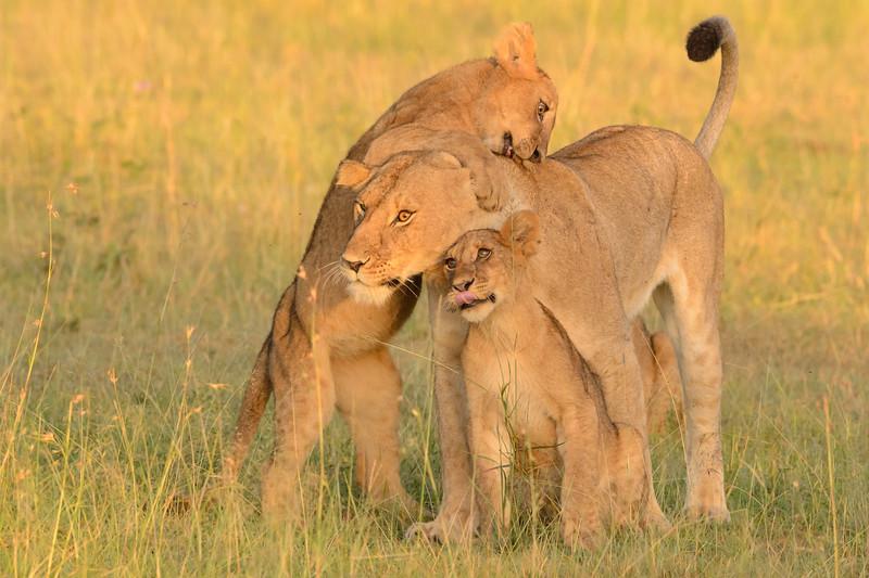 20160215__KET7429_Serengeti_Day_7.jpg