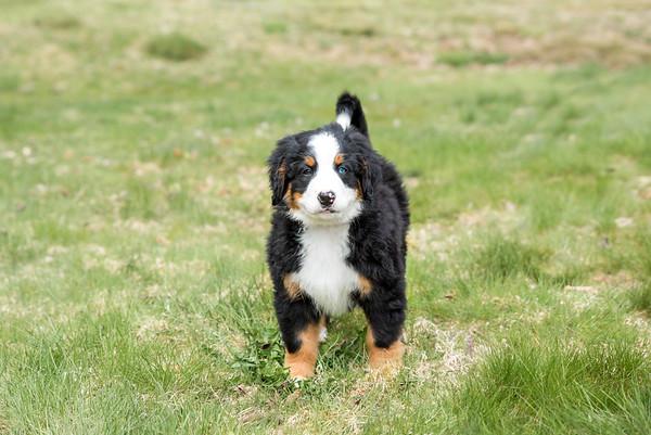 Puppies 2019