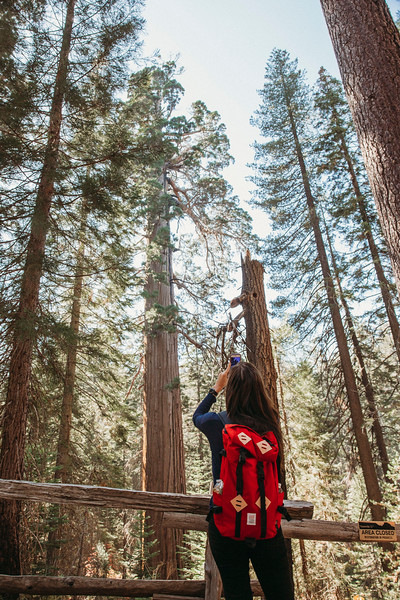Forest_City_Photographs_Honeymoon_Califonia_San_francisco_Yosimite-188.jpg