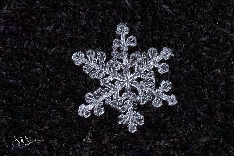 snowflakes-1191.jpg