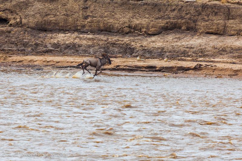 North_Serengeti-71.jpg