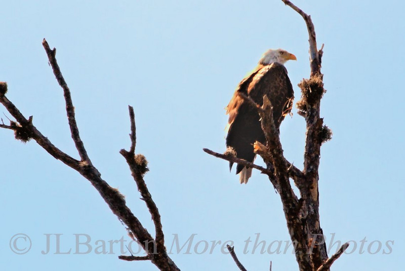 Watching
