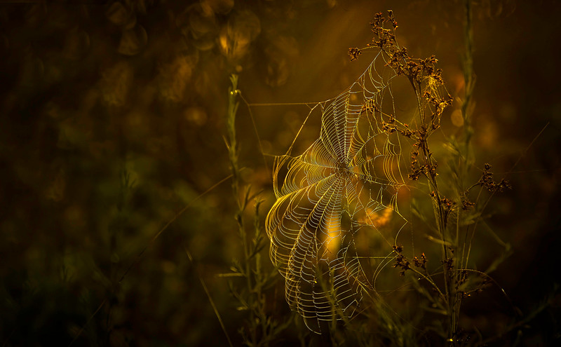 The Magic of Light-162.jpg
