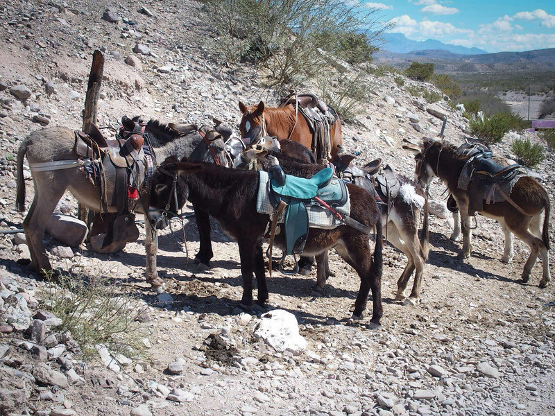 The donkey's waiting to take the tourist back to the ferry (we choose to walk).