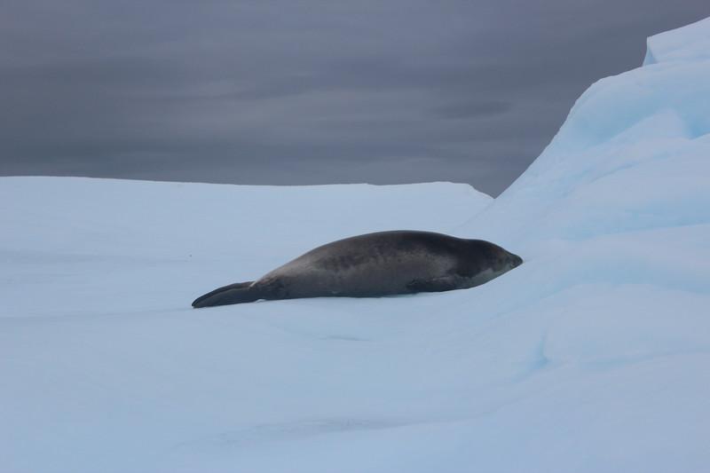 Antarctica 281.JPG