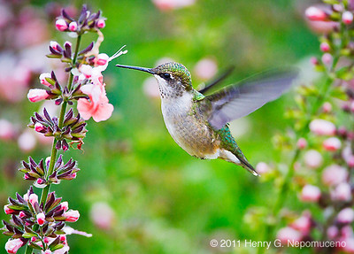 Chicago Birding