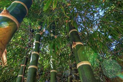 G2 Bamboo