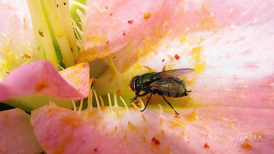 Insectum; Insect; Insekter;
