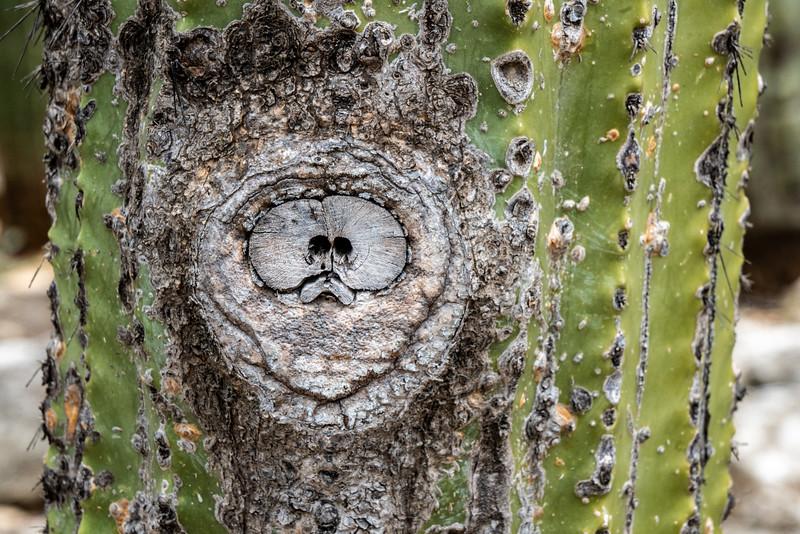Ethnobotanical Garden of Oaxaca