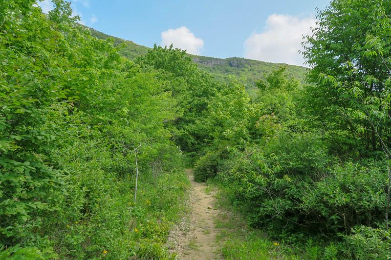 Graveyard Ridge Trail -- 5,450'