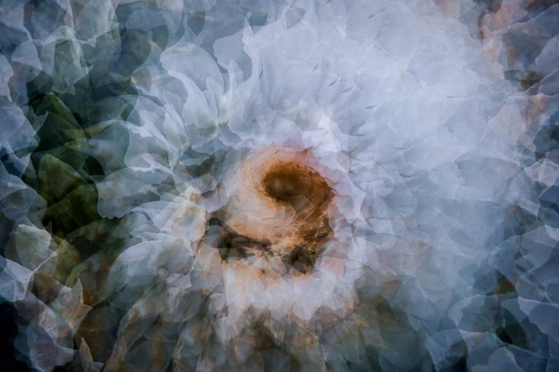 oct 12 - flower.jpg