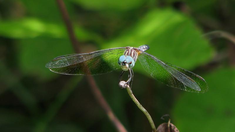 dragonfly_7028.jpg