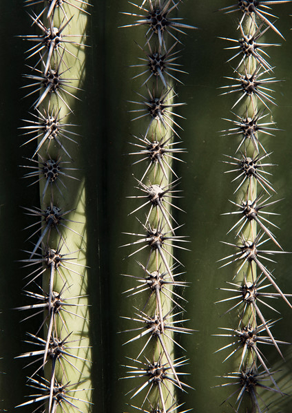 Arizona_090617_1074.jpg