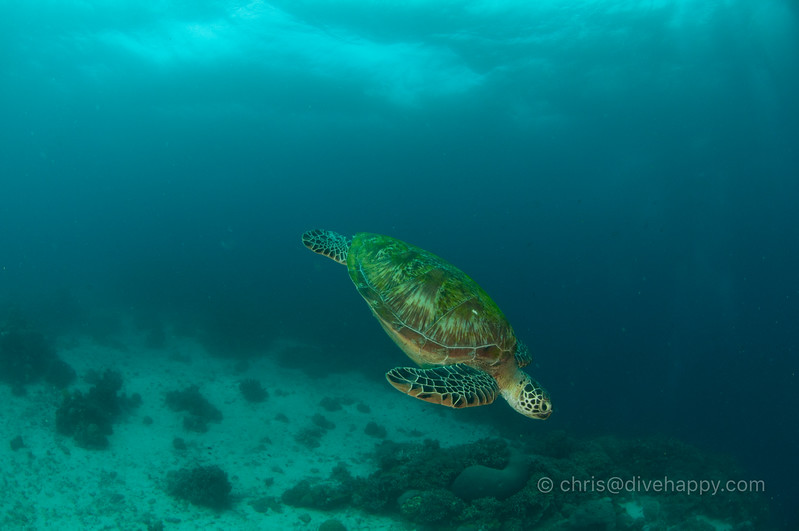 dumaguete-apo-island-diving-2017-divehappy-chris-mitchell-5.jpg