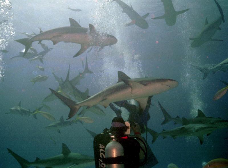 Shark 5.JPG
