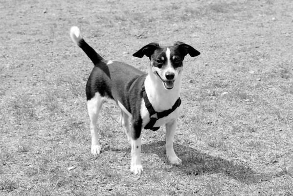 2010-04-11 Denville Dog Park at Noon
