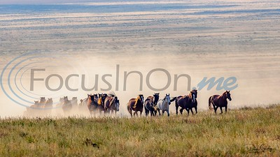 9/18/19 The Wild Horses Of The Onaqui Mountains by Don Spivey