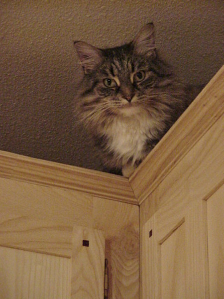kez on cupboards.jpg