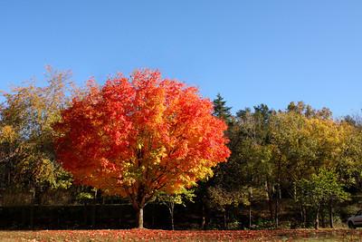 Fall - The Season of Color