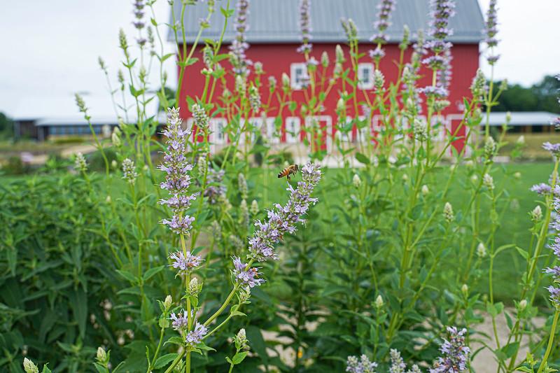 Arboretum, July Harvest-80.JPG