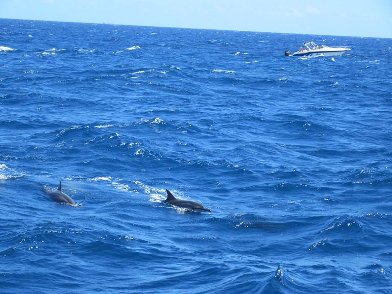 036_The West Coast. Sail the Dolphin Coast.JPG