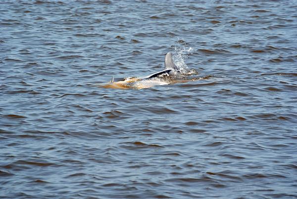 Jekyll Island Boat Tours Dolphin 05-03-21