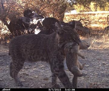Wildlife Camera Project