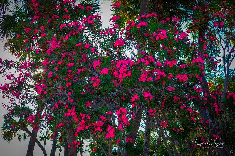 Sarasota-16.jpg