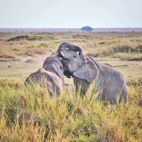 When Elephants Kiss