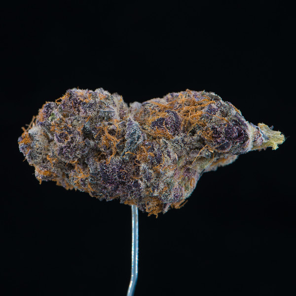 Tropicana Cookie  1.jpg