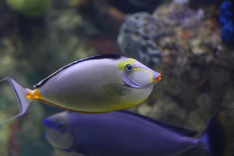 Riverbanks Zoo Aquarium