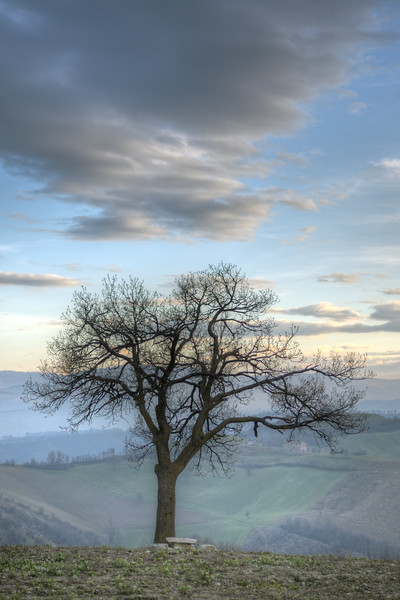 Lonely Tree - Casalgrande, Reggio Emilia - January 1, 2013